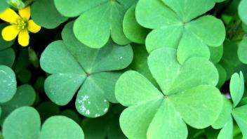 st-patrick-why-green__h_d__366187_1104x622-16x9_2